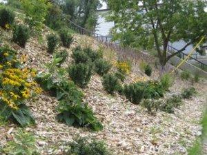 Beach Hill Garden - Looking South
