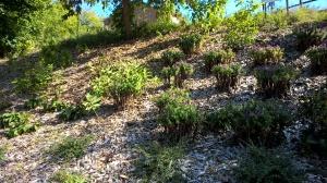 hill + plants 2015
